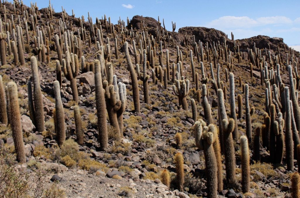 an island covered in cacti