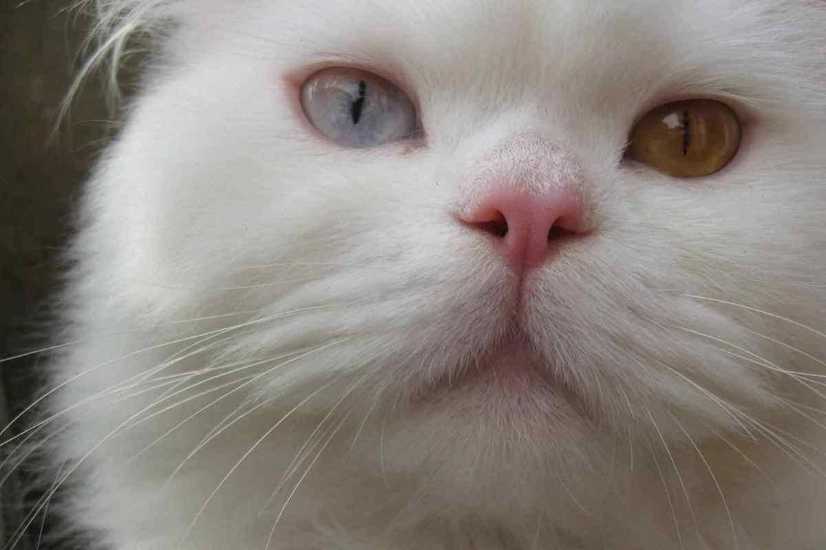 PETS-cats1.jpg?fit=1200%2C800