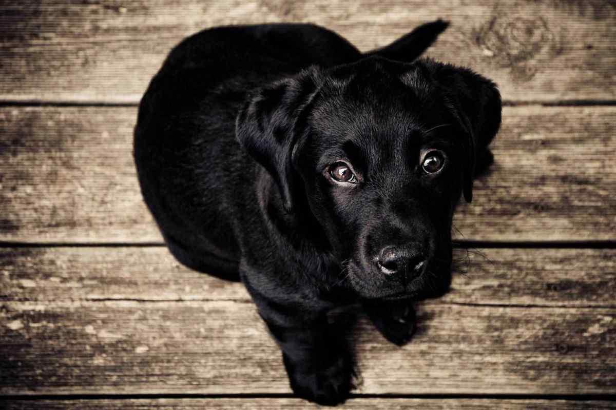 PETS-dog4.jpg?fit=1200%2C800