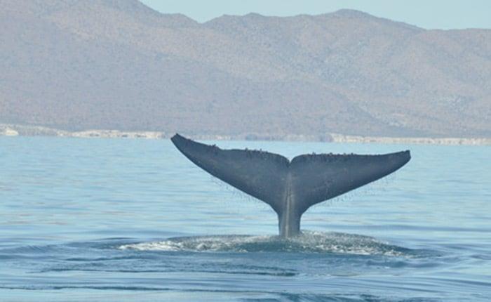 Oekoreisen-Mexiko-Vamos-Baja-California-02-oceano
