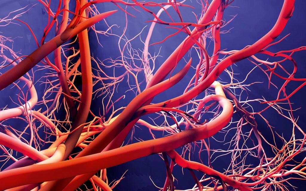 vaisseaux capillaires