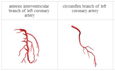 Anatomy_Heart arterial