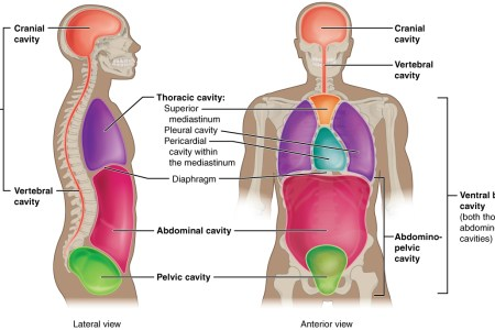 interior inferior anatomy definition » Full HD MAPS Locations ...