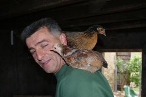 poulets sur l'épaule faisant un câlin