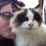 chat tout poilu dans les bras