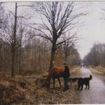 chevaux chiens et jeune fille dans les bois
