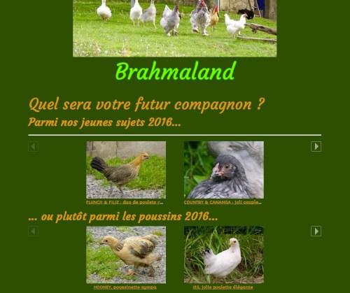 la Boutique de Brahmaland