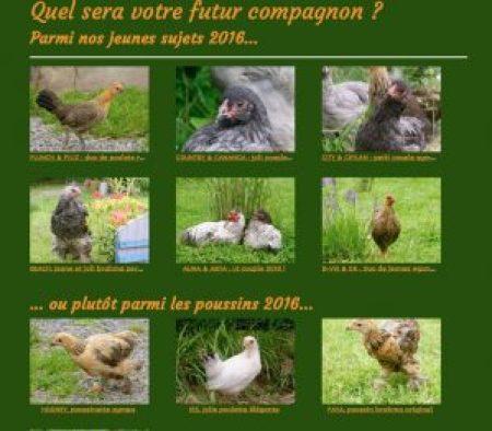 Extrait des catalogues poussins et jeunes poulets, de la boutique de vente en ligne de poules