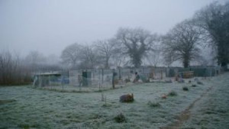 Brahmaland, le jardin des poules sous le givre.
