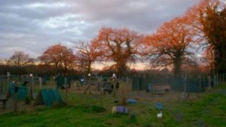 Brahmaland : le soleil matinal se reflète dans les arbres