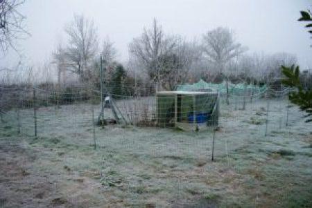 Le nouvel enclos de nos wyandottes naines, dans le givre hivernal