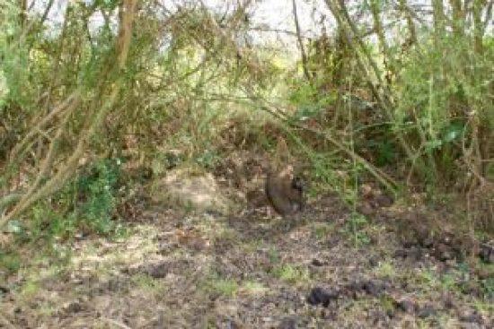 devinette : chercher les poussins cachés dans la végétation