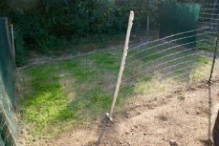 carré de pelouse en pleine pousse !