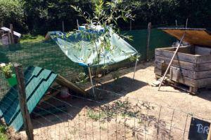 Petit auvent pour l'ombre, toit ouvert pour aérer le poulailler
