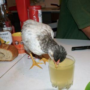 P'Ang boit dans un verre du perrier !!