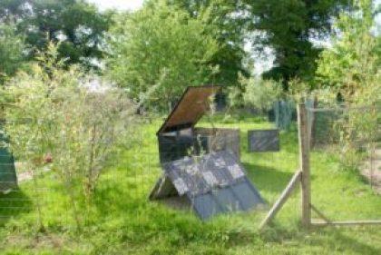 jardin enherbé et poulailler ouvert en cours de désinfection