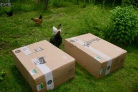 nos poulets viennent de suite inspecter les colis posés dans le jardin !