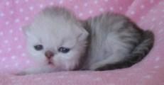 Garfield13Tage