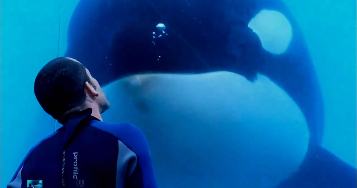 Blackfish: a heartbreaking plea for a species' freedom