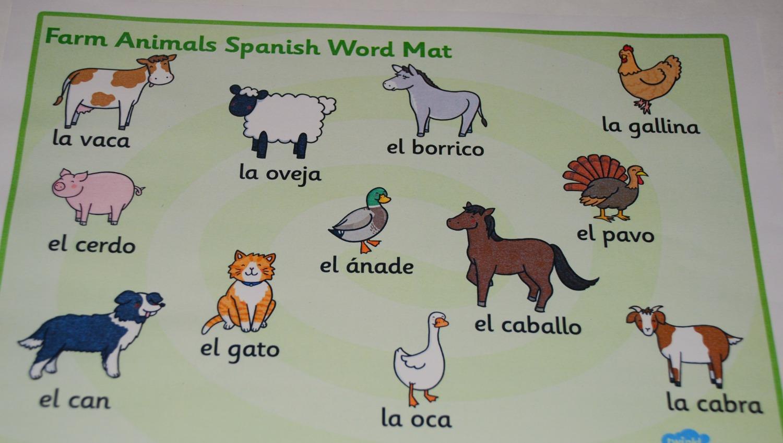 Beginner Spanish Folder
