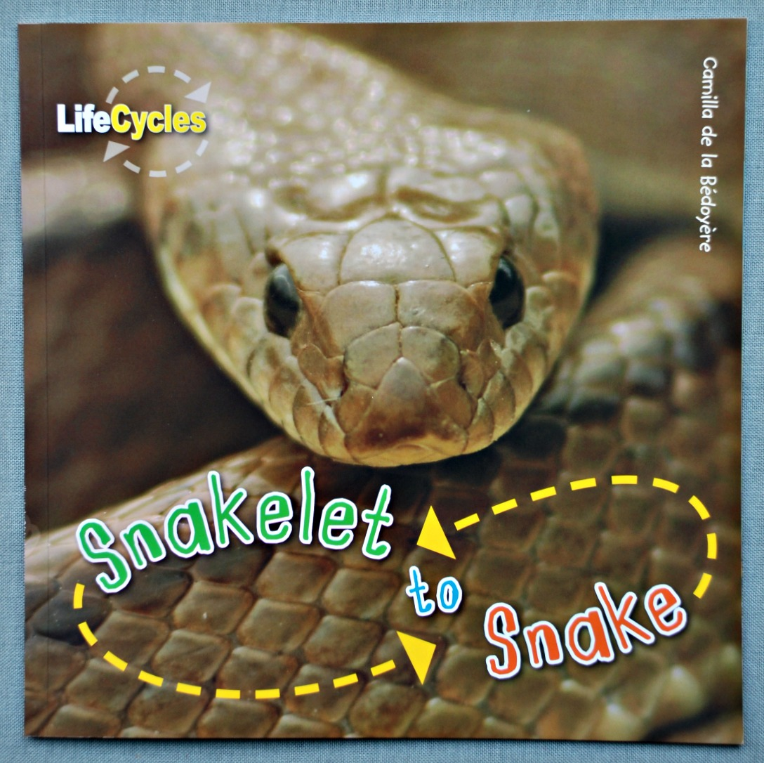 Snake Life Cycle Book And Activities
