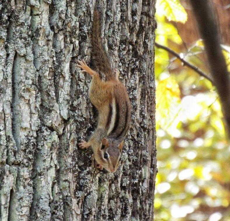 killbear-provincial-park-warning-chipmunk