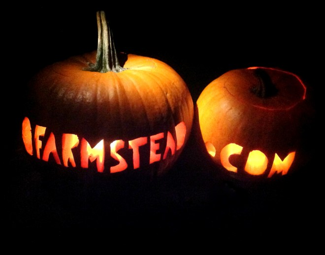 ofarmstead pumpkins - halloween 2013