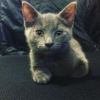 Meet Oberon