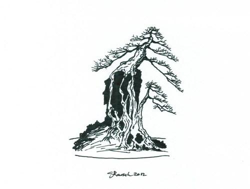 root-over-rock