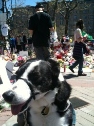 Boston Marathon shrine, Copley Square.