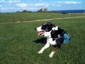 Chillaxin on the seaside lawn.