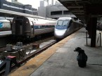 Which train is ours? (None of them, Pup. These are Amtraks.)