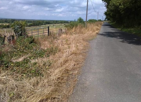 Irish Wildlife Trust calls on local authorities and members of the public to cut out herbicide use
