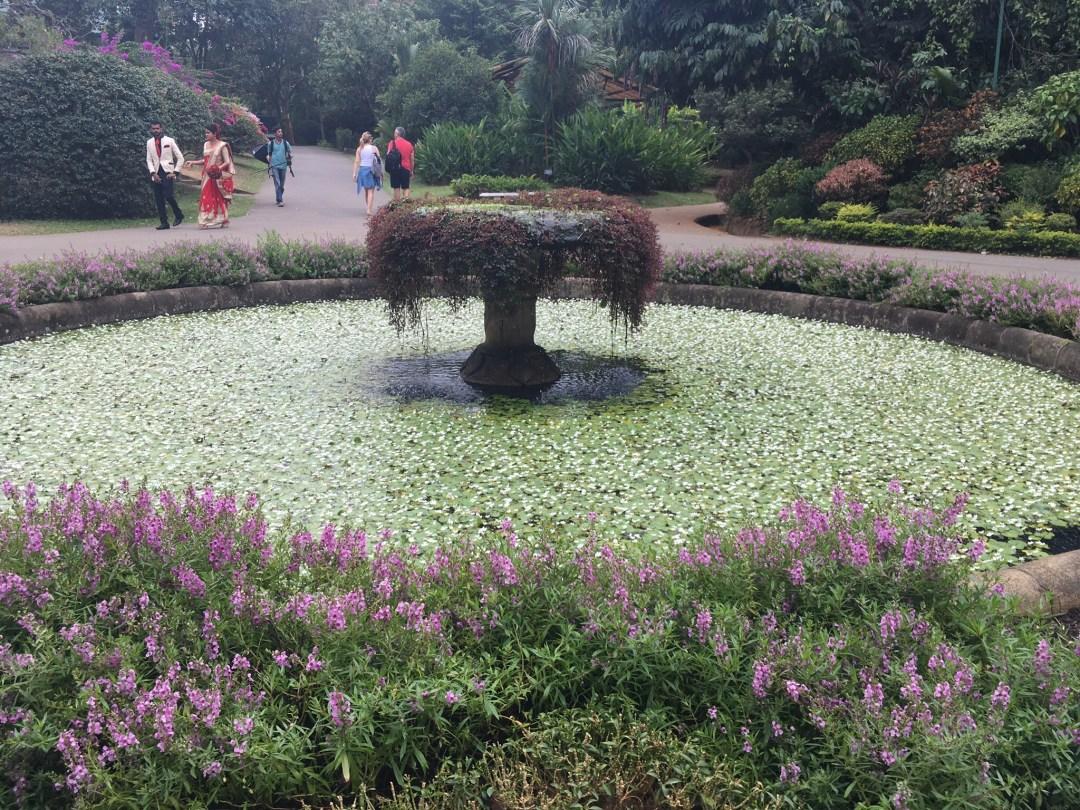 lily pad  covered fountain at Royal Botanical Gardens in Peradeniya Sri Lanka