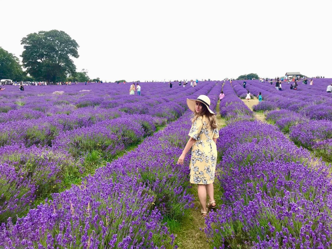 People pose for pictures at Mayfield Lavender farm