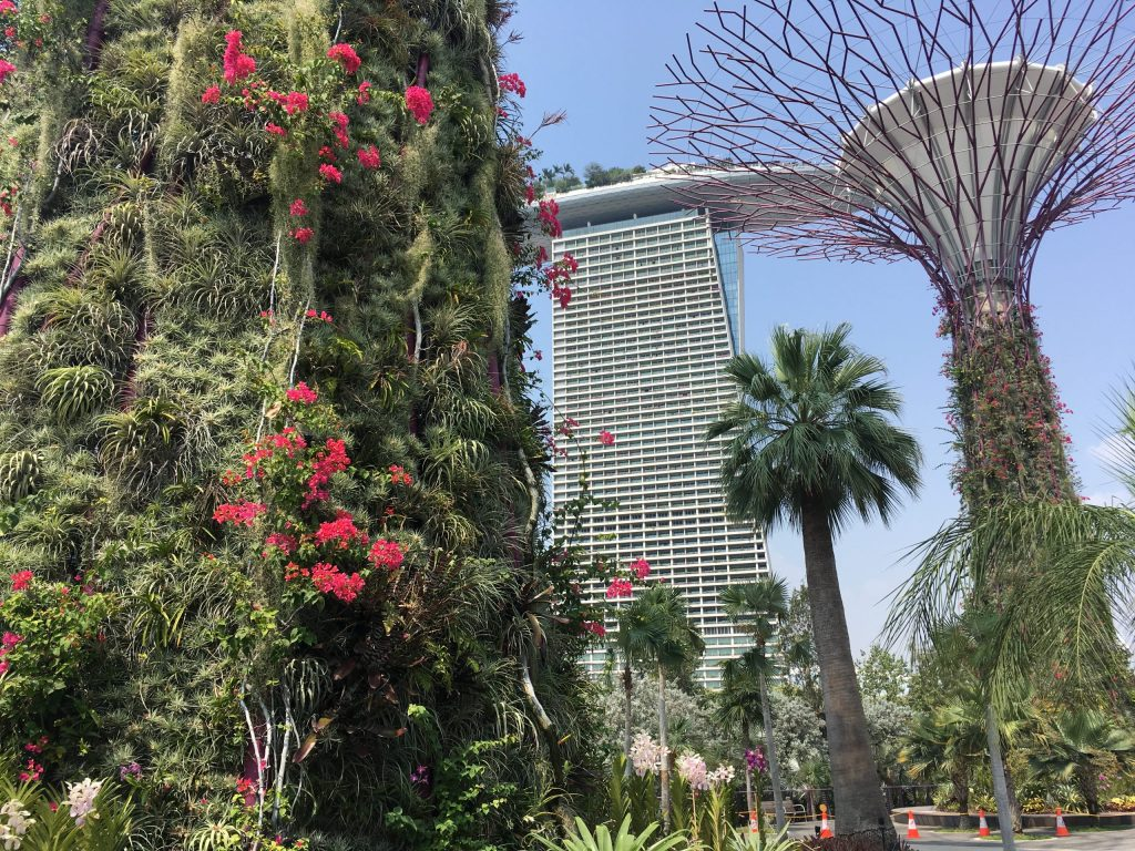 Gardens by the Bay with Marine Bay Sands in the background in Singapore