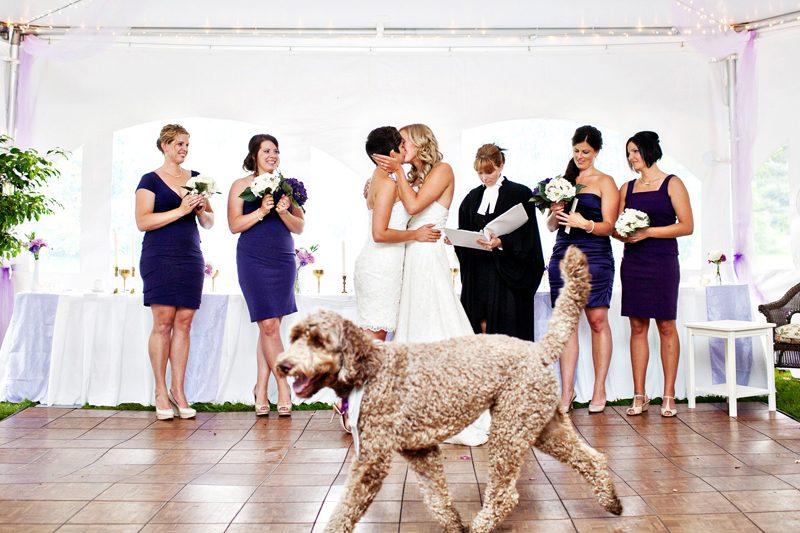 Best wedding photobombs ever