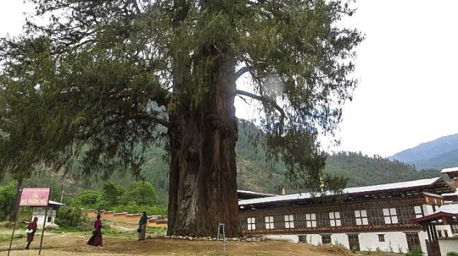 Peace and beauty at Pangri Zampa, Thimphu