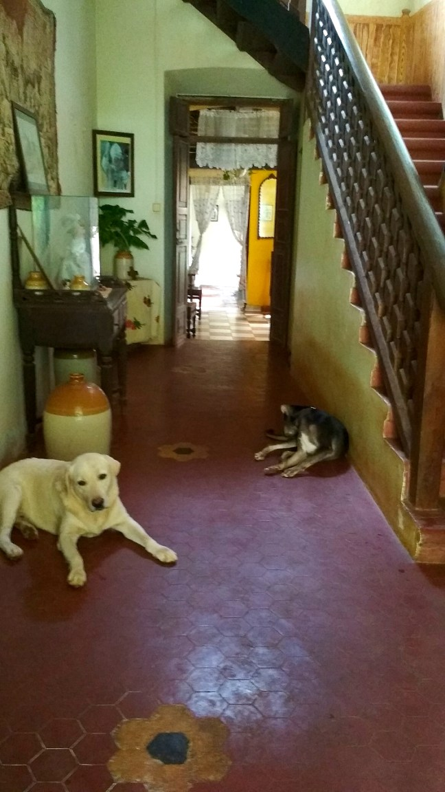 Cancio's House is Amaral family's' Goan-Portuguese home in aldona. A 500 years old house with Portuguese Homestay is perfect stay in North Goa - Offbeat Goa