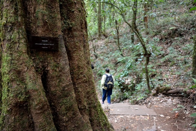 Kew Mae Pan Nature Trail (เส้นทางศึกษาธรรมชาติ กิ่วแม่ปาน) Doi Inthanon National Park Thailand is an amazing 3 km hiking trail. Experience rainforest, grasslands, waterfalls and beautiful Rhododendron flowers – One of the top places to visit in Chiang Mai - Motorbike backpacking trip across Mae Hong Son Loop, Thailand
