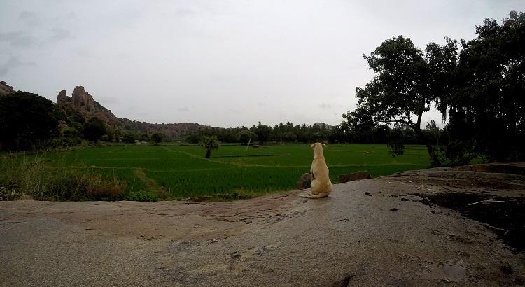 Hampi in monsoon