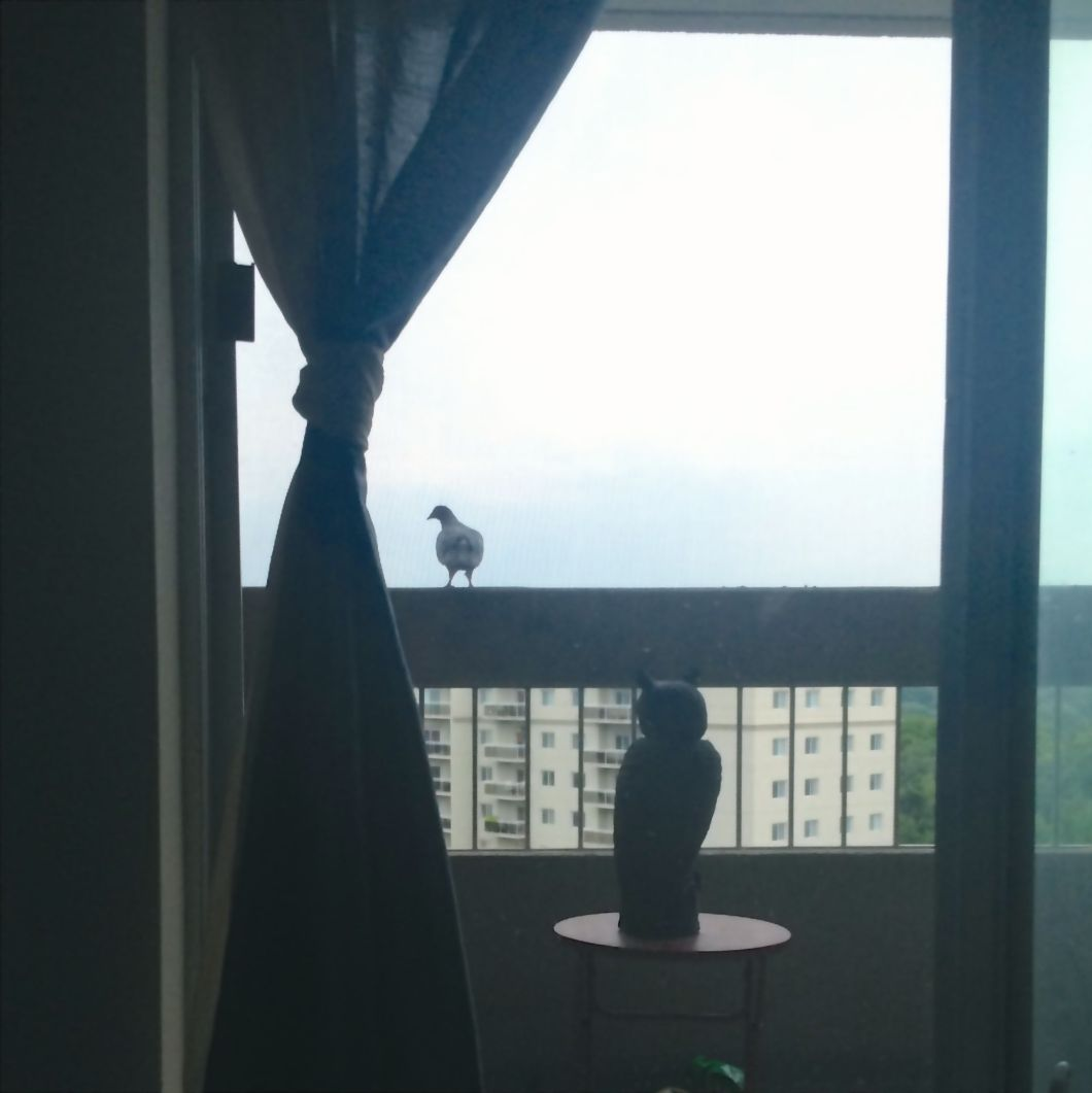 How do I keep pigeons off my apartment balcony?