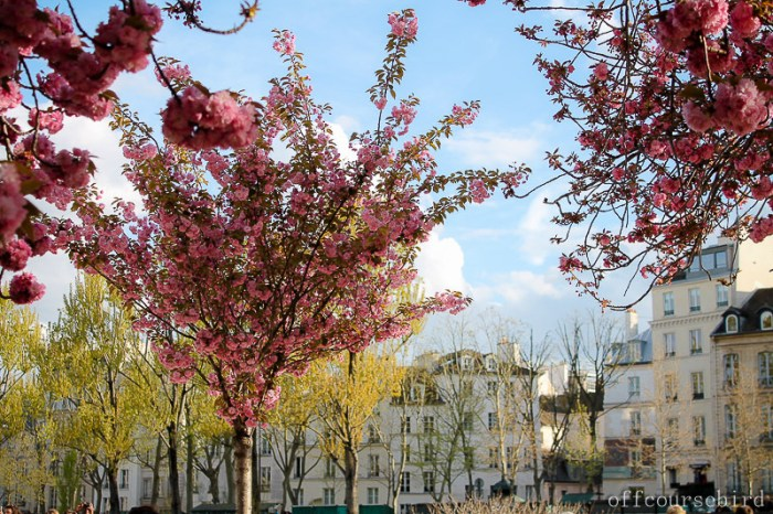 spring Paris travel