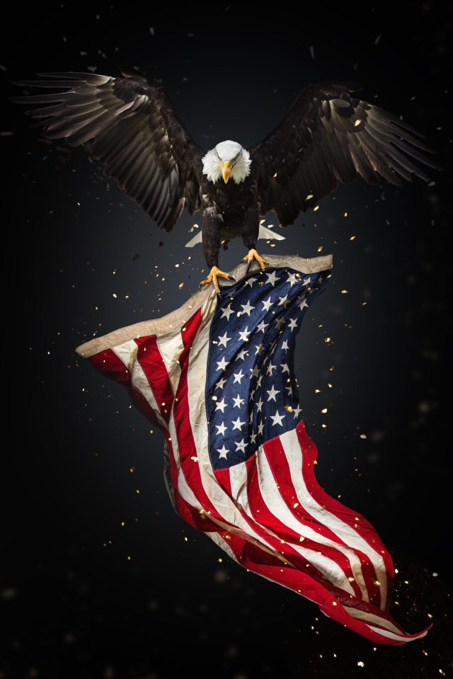 Eagle Carrying Flag