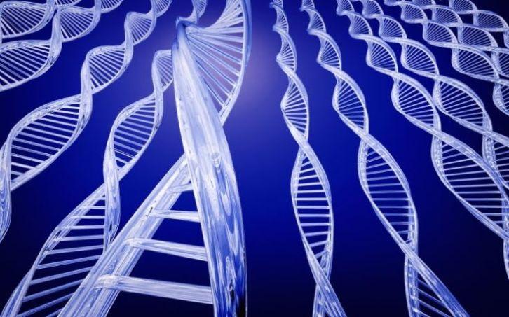 genes-determines.jpg