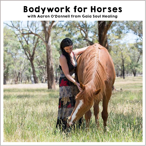 Body work and natural healing of horses at the Off-Grid Living Festival, May, Eldorado Victoria