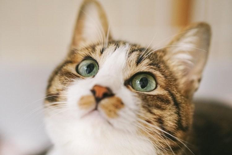 群馬で猫カフェを始める