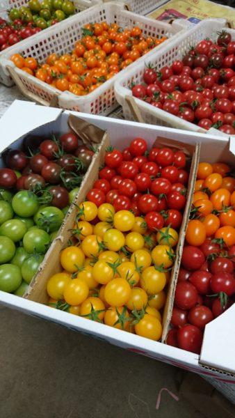 榎本農園の色とりどりなミニトマト