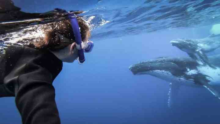 swim with whales in Tonga 15 1 scaled