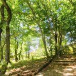 杜の小道の写真